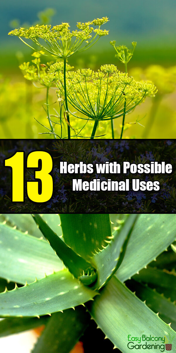 13 Herbs with Possible Medicinal Uses - Easy Balcony Gardening