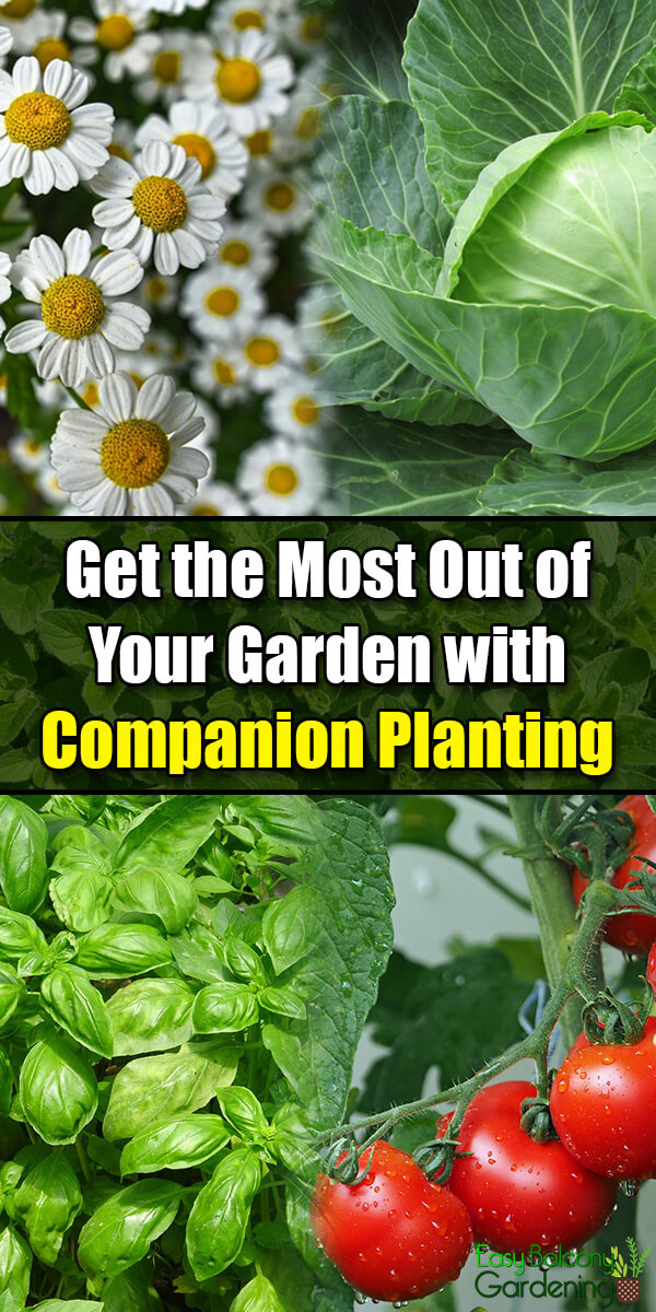 Get the Most Out of Your Garden with Companion Planting - Easy Balcony Gardening