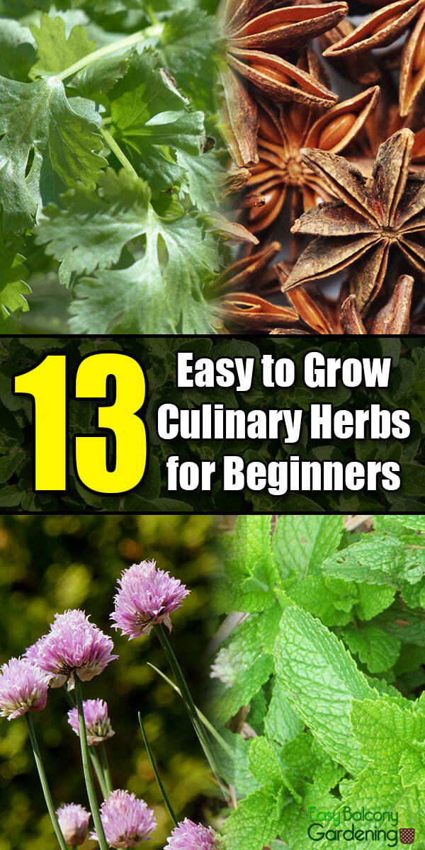 13 Easy to Grow Culinary Herbs for Beginners - Easy Balcony Gardening