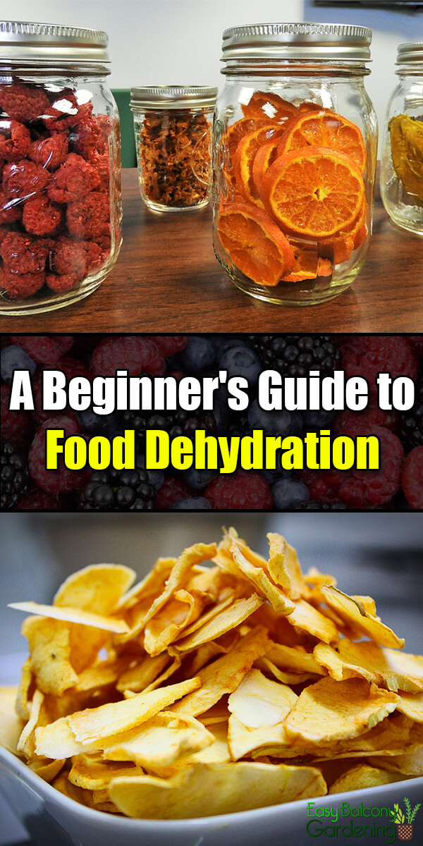 A Beginner's Guide to Food Dehydration - Easy Balcony Gardening
