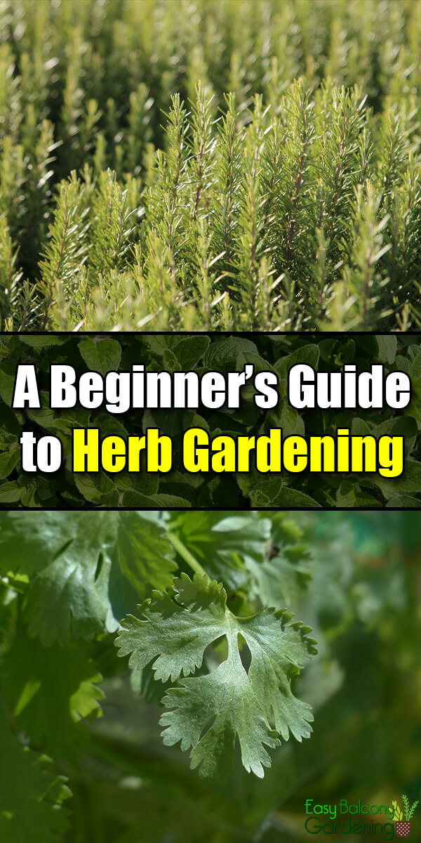 A Beginner's Guide to Herb Gardening - Easy Balcony Gardening