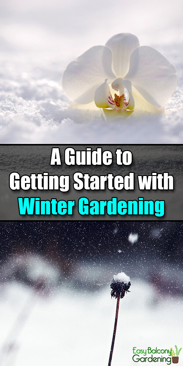 A Guide to Getting Started with Winter Gardening - Easy Balcony Gardening