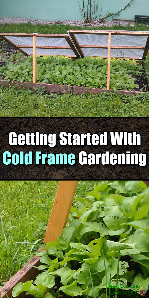 Grow Fresh Vegetables All Year Round With Cold Frame Gardening - Easy Balcony Gardening