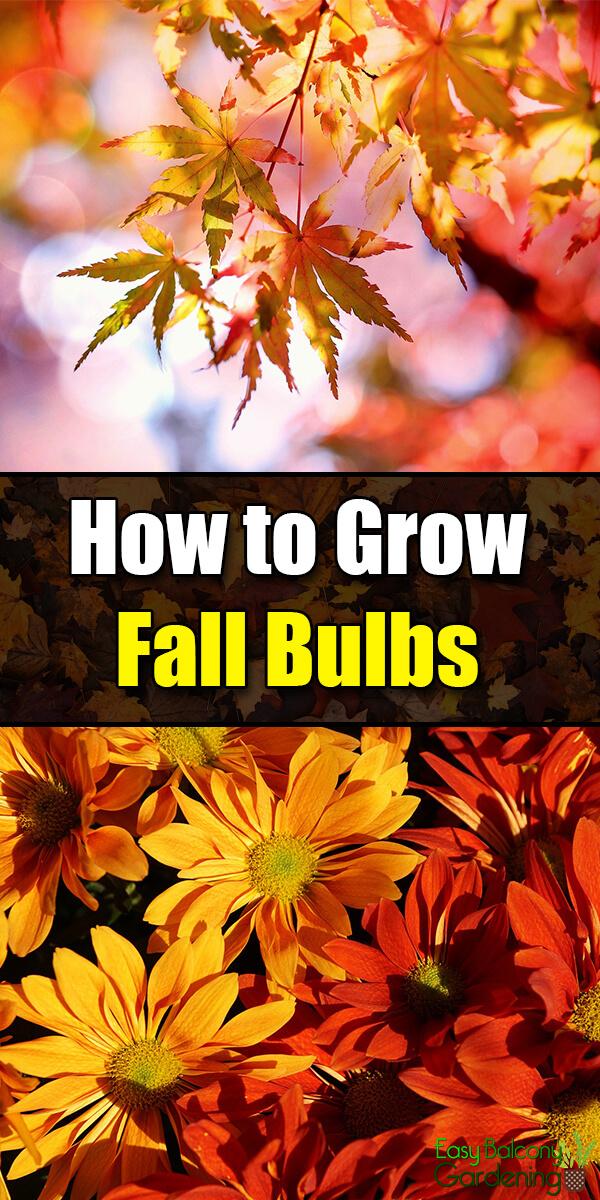 How to Grow Fall Bulbs - Easy Balcony Gardening