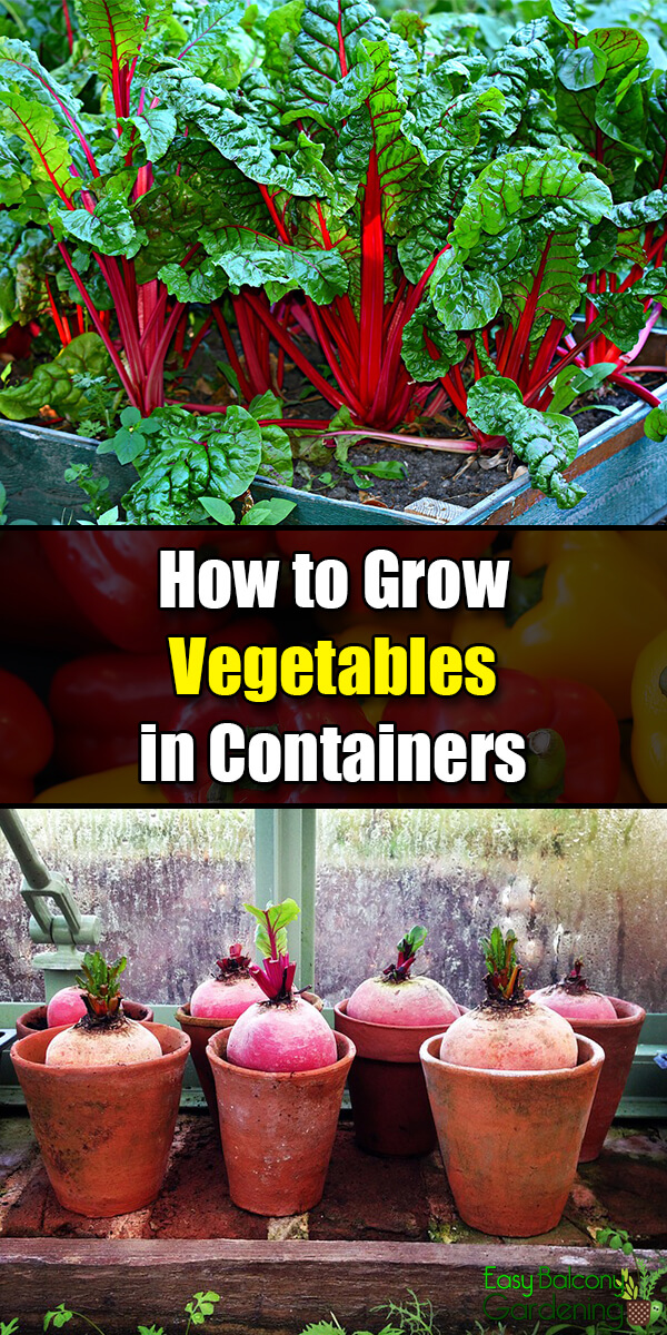 How to Grow Vegetables in Containers - Easy Balcony Gardening