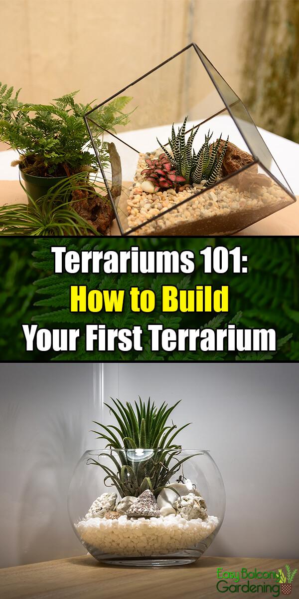 Terrariums 101: How to Build Your First Terrarium - Easy Balcony Gardening