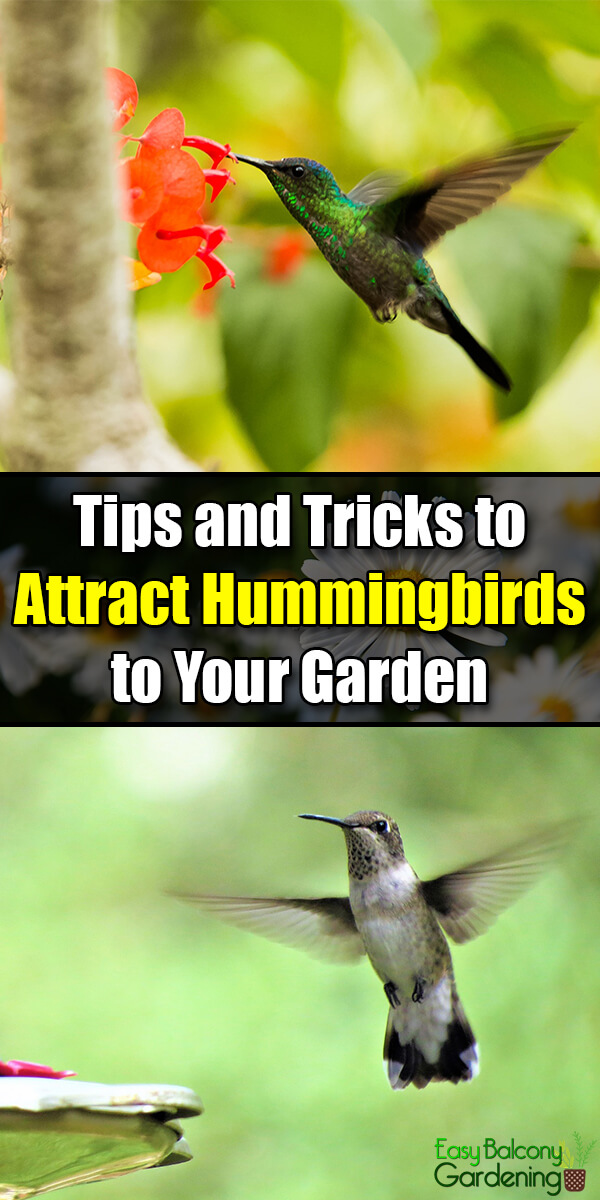 Tips and Tricks to Attract Hummingbirds to Your Garden - Easy Balcony Gardening