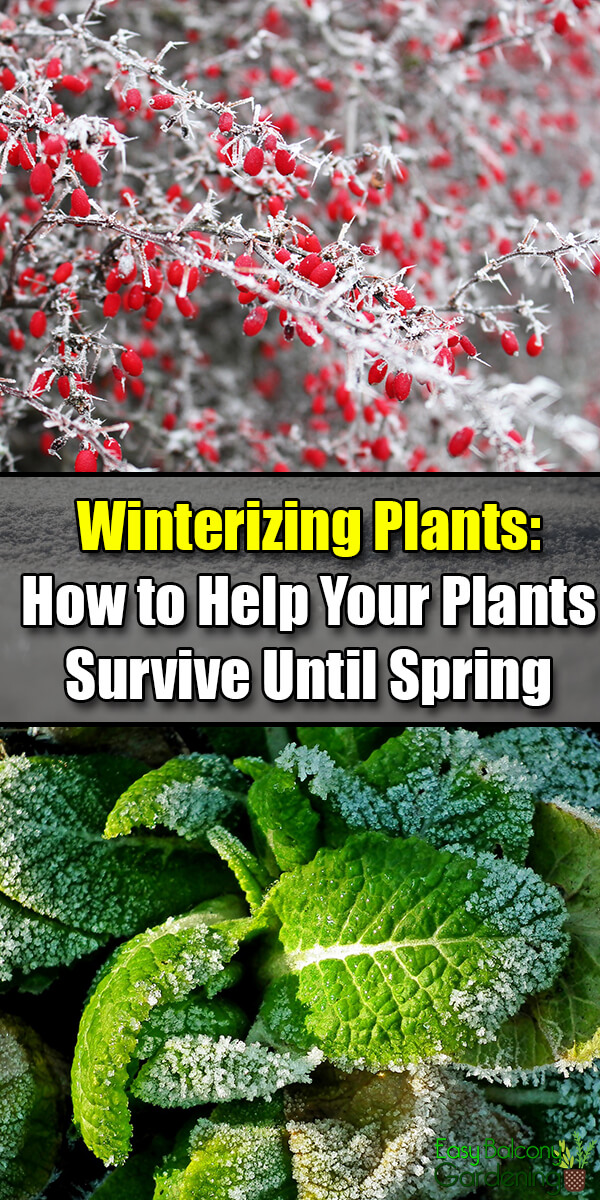 Winterizing Plants - How to Help Your Plants Survive Until Spring - Easy Balcony Gardening