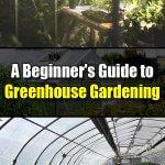 A Beginner's Guide to Greenhouse Gardening - Easy Balcony Gardening