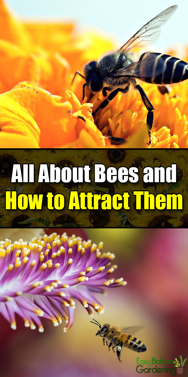 All About Bees and How to Attract Them
