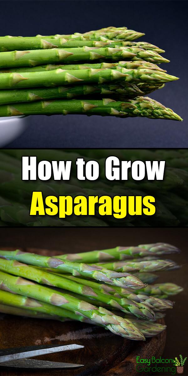 How to Grow Asparagus - Easy Balcony Gardening