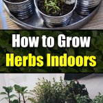 How to Grow Herbs Indoors - Easy Balcony Gardening