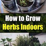 How to Grow Herbs Indoors - Easy Balcony Gardening