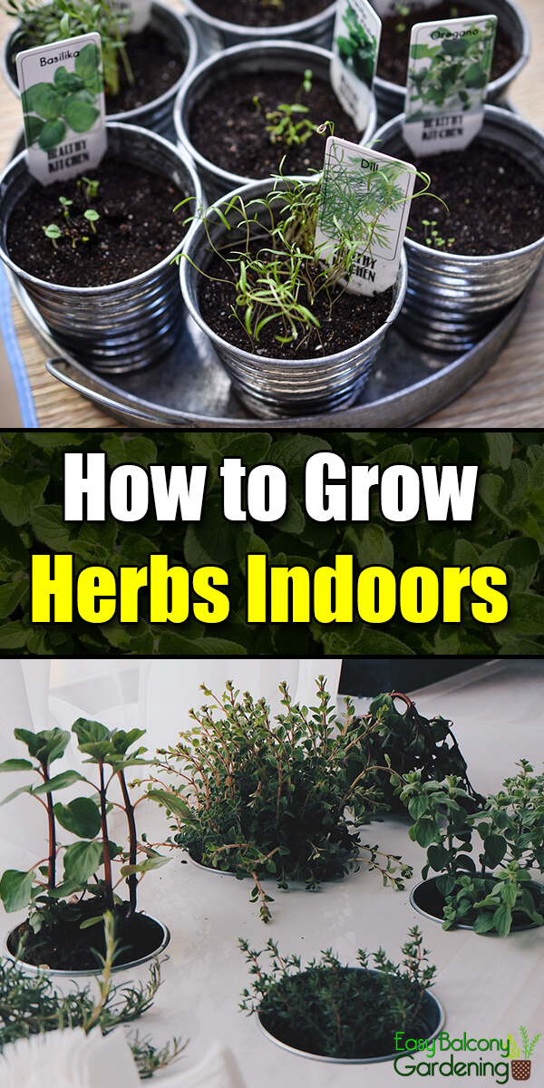 How to grow herbs indoors easy balcony gardening - Herbs that can be grown indoors ...