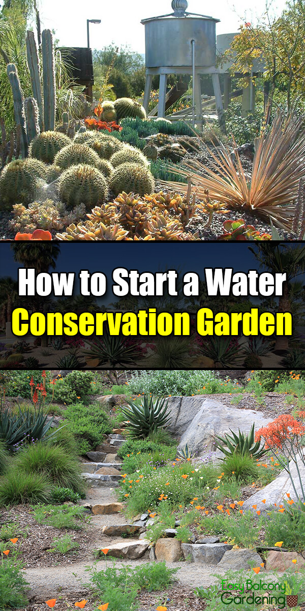 How to Start a Water Conservation Garden - Easy Balcony Gardening