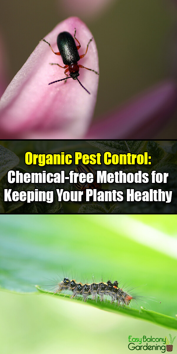 Organic Pest Control Chemical-free Methods for Keeping Your Plants Healthy - Easy Balcony Gardening
