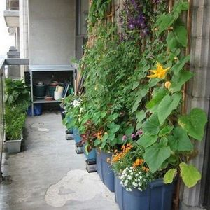 180 Container Gardening Ideas and Inspiration - Easy Balcony Gardening #containergarden #containergardening #indoorgardening